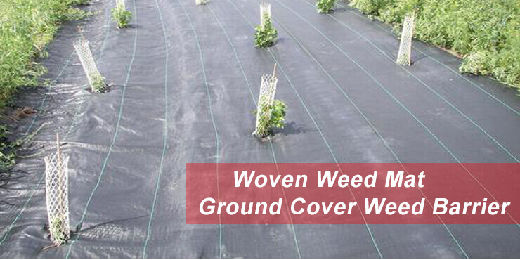 ground-cover-weed-control