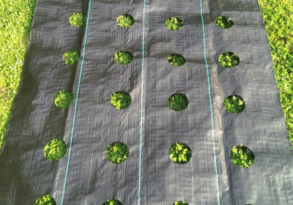 weed-control-fabric